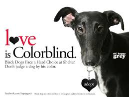 Are Dogs And Cats Color Blind 166 Best Greyt Blacks Images On Pinterest Whippets Greyhounds