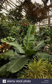 uk wales swansea plantasia indoor tropical garden stock photo