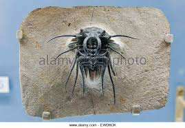 fossil case stock photos u0026 fossil case stock images alamy