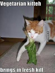 Memes Vegetarian - this is what would happen if cats were vegan of course it s