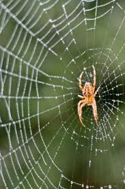 34 best spiders images on pinterest spiders pest control and bugs