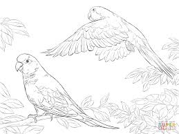 106 best parrot coloring pages images on pinterest drawings