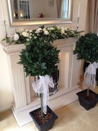 ficus trees 1 8 metres with wedding sashes and pots complete