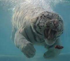 by harry fayt underwater harry fayt pinterest this would be me after a few months if i ever tried to become a