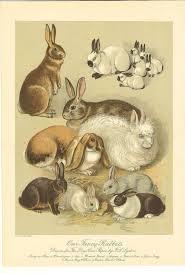 vintage rabbit 88 best vintage rabbit illustrations images on bunny