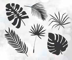 palm leaves cuttable design tree leaves svg tropical svg
