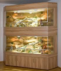 collared lizard enclosures reptile forums information