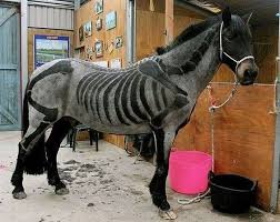 Halloween Costumes Horse 108 Horse Halloween Costumes Images Horses