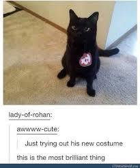 Kitten Halloween Costumes Pet 25 Cat Costumes Ideas Cute Cat Costumes Cat