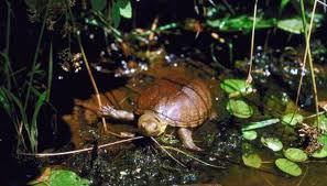 ultimate pet turtle habitat animals mom me