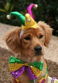 mardi gras dog i got my attire on and i m ready for the celebrations