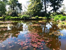 fantastic japanese garden review of royal tasmanian botanical