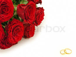 beautiful rose rings images Red beautiful roses and golden wedding rings stock photo colourbox jpg