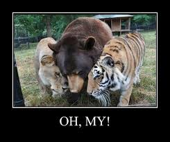 Tiger Meme - animal capshunz tigers funny animal pictures with captions