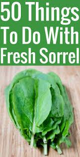 cuisiner l oseille recettes à l oseille 50 idées pour cuisiner l oseille fraîche