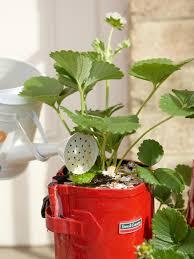 Diy Strawberry Planter by Diy Strawberry Planter How Tos Diy