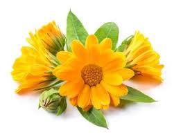 Calendula Flowers Mood Benefits Of Eating June Flowers Dr Douillard U0027s Lifespa