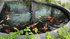 Solar Lights For Ponds by What Is The Original Liner Pond Koi Pond How To Create Uv