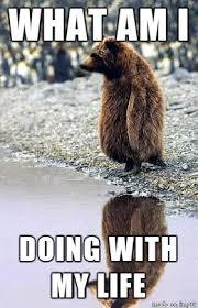 confession bear meme what about memes pinterest bear meme