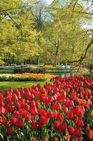 83 best keukenhof gardens images on pinterest gardens