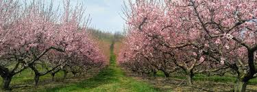 welcome to jenkins lueken orchards in new paltz ny
