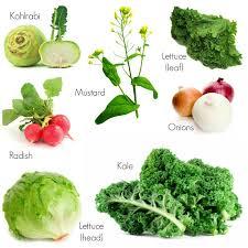 1169 best gardening images on pinterest plants veggie gardens