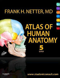 Anatomy And Physiology Pdf Books Di Fiore Atlas Of Histology Pdf Free Download All Medical Stuff