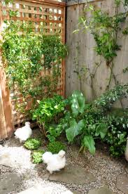 Chickens For Backyard by 123 Best Cluckity Cluck Images On Pinterest Backyard Chickens
