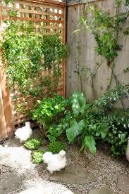33 best chicken garden images on pinterest chicken garden