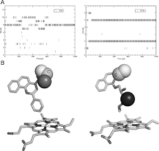 computational prediction of binding affinity for cyp1a2 ligand
