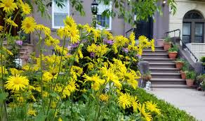 curb appeal 11 front garden ideas to steal from brooklyn gardenista
