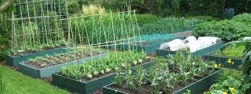 vegetable garden raised bed vs ground vegetable raised garden beds