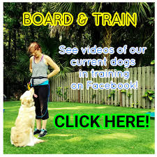orlando florida dog training central fl dog trainer dog