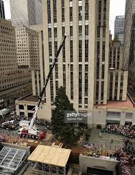 rockefeller center christmas tree delivered to nyc ahead of