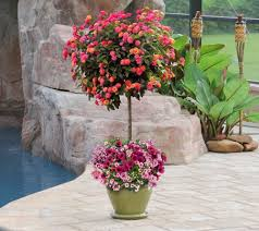 Potted Patio Trees by Cottage Farms 2 Piece Confetti Garden And Lantana Tree Bundle