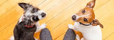 Pet Hill U0027s Pet Nutrition Dog Food Cat Food That Transforms Lives