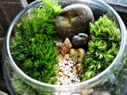mini bowl terrarium with live moss already assembled ready to