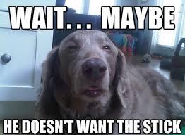 Yes This Is Dog Meme - 25 funny dog memes dogtime