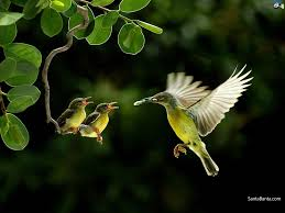 wallpaper with birds full hd wide nature wallpapers images i beautiful nature photos