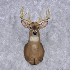 Whitetail Deer Home Decor by Whitetail Deer Shoulder Mount 12345 The Taxidermy Store