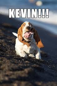 Funny Animal Memes Tumblr - funny animal meme tumblr funny photo shared by imogene33 fans