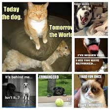 Hyper Dog Meme - once upon a time a dog and cat were friends i wish according 2 kat