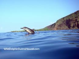 facts about dolphins how to draw them and understand their behavior