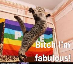 image 243037 bitch i m fabulous know your meme