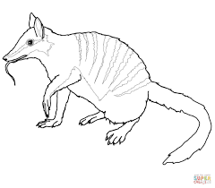australian numbat coloring page free printable coloring pages