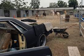 urban cowboys raise horses in compton photos abc news
