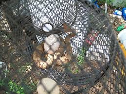 best way i u0027ve found yet to deal with snake problems backyard