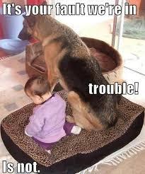 Funny German Shepherd Memes - funny dog memes twitter search