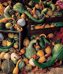 orn big gourds mix gourd seeds and plants vegetable gardening at