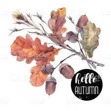 vintage bouquet of twigs yellow oak leaves and acorns stock vector